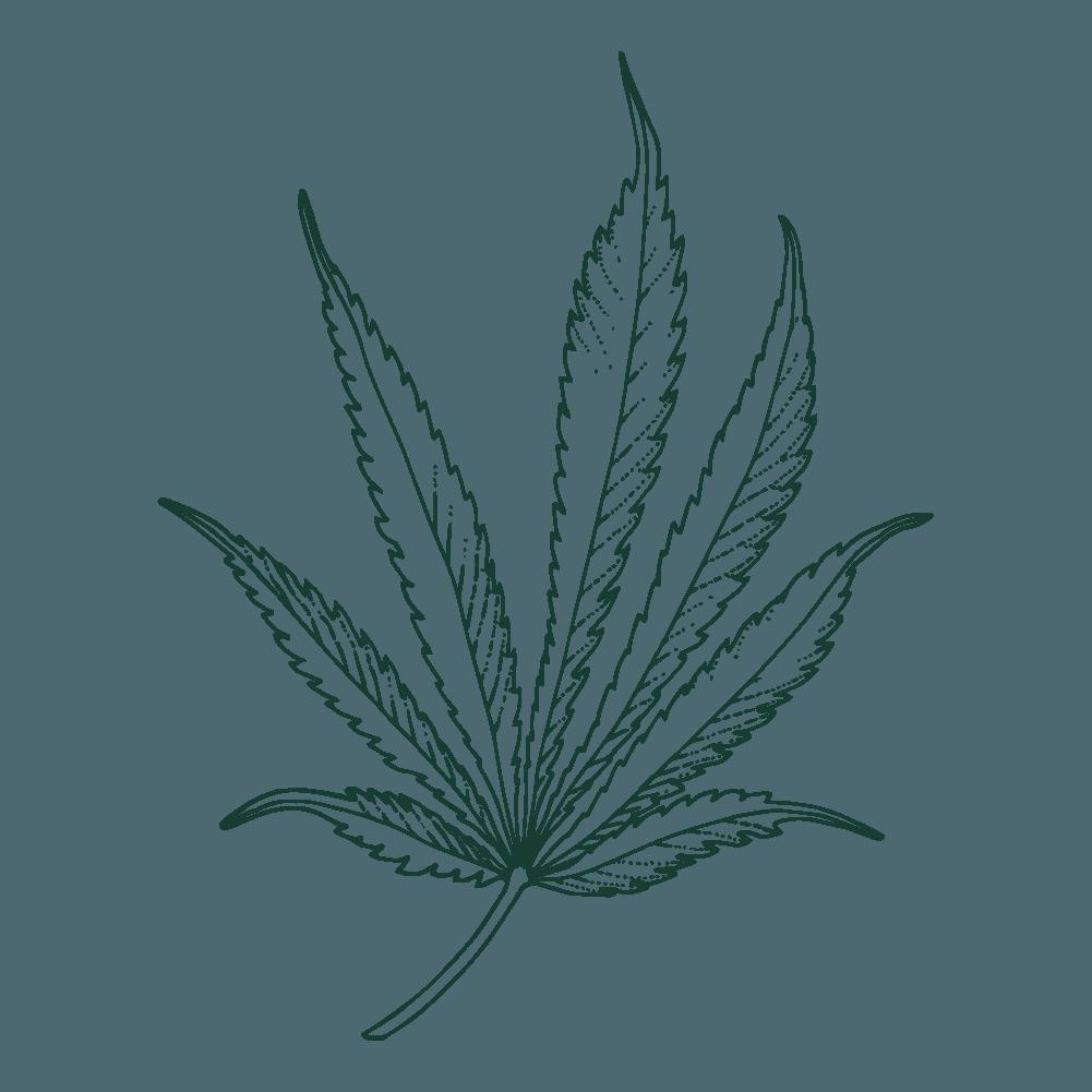 illustration of pennywise leaf
