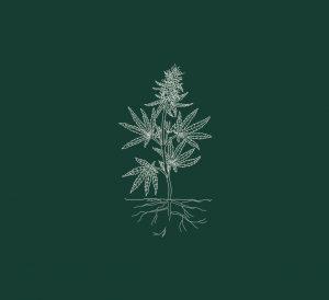 cannabis plant illustration