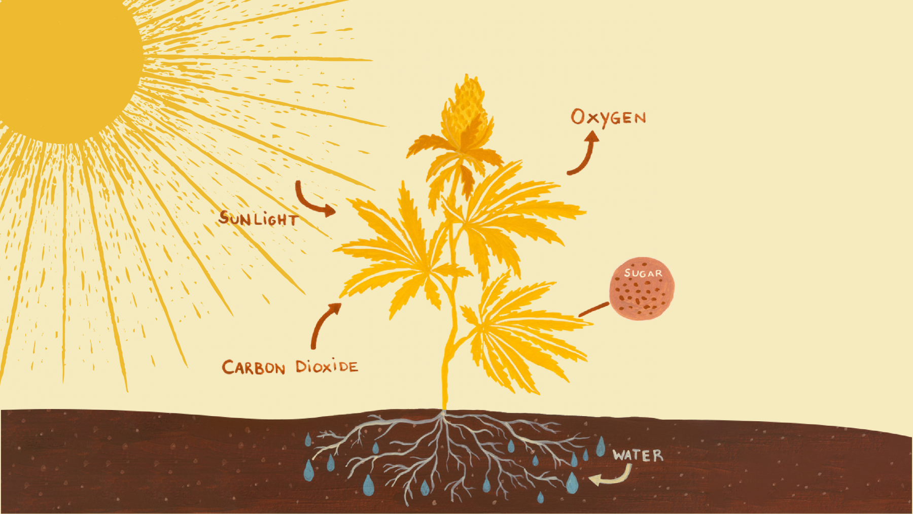 Plants need sun to create food – a process known as photosynthesis