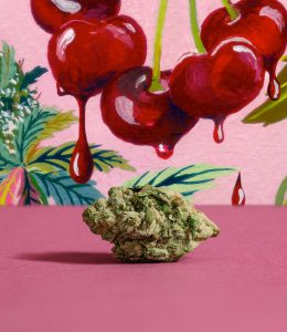 photo of black cherry punch bud with illustrations of dripping cherries in the background